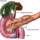 Питание при остеохондроз шейного отдела позвоночника
